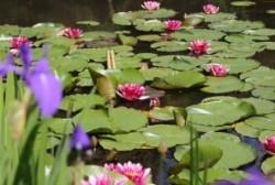 2三浦庭園