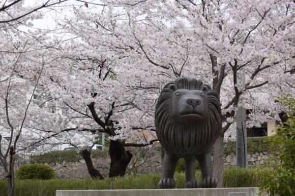 桜とライオン城山公園-