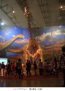 ③トゥリアサウルス 復元骨格(半身)2-thumb-576x801-27934